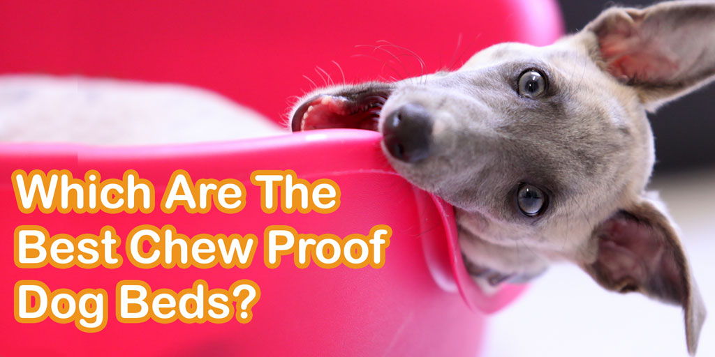 Finding the Best Chew Proof Bed for a Dog